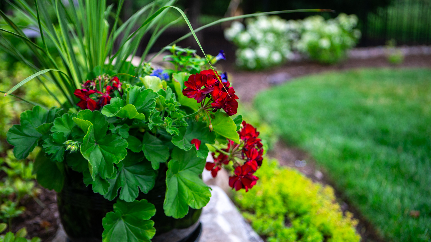 How to Choose the Best Container Plants for Your Landscape