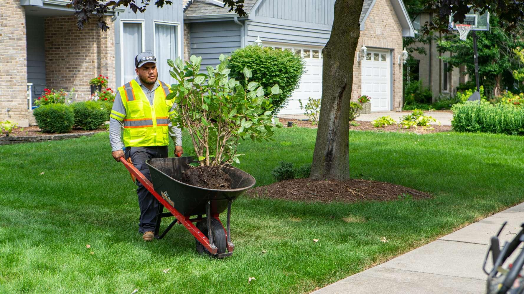 landscapers planting
